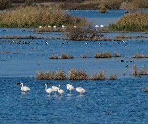 La chg har un humedal artificial junto a la laguna de for Construir laguna artificial