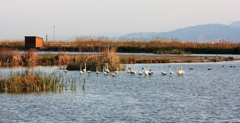 Aves en el Tancat de Milia, Albufera_tcm7-238236