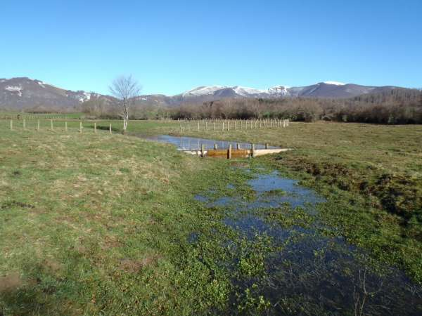 Humedal de Jauregiaroztegi en Burguete