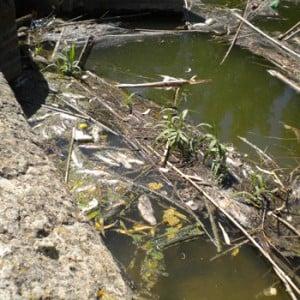 contaminacion-rio-arroyo-300x300