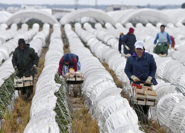 Cultivos de regadío bajo plástico en la denominada Corona Norte.