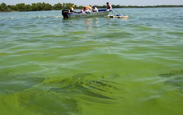 Estado del lago Ypacaraí a finales de enero.