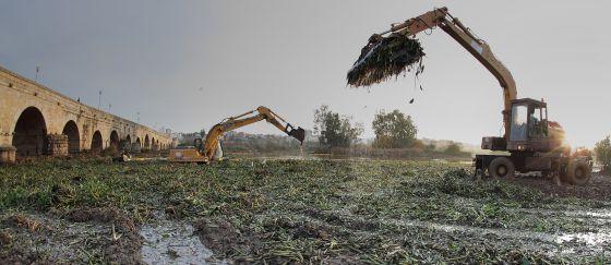 Máquinas recogiendo el camalote, planta invasora que se extiende por el Guadiana, a su paso por Extremadura. / RN FOTÓGRAFOS