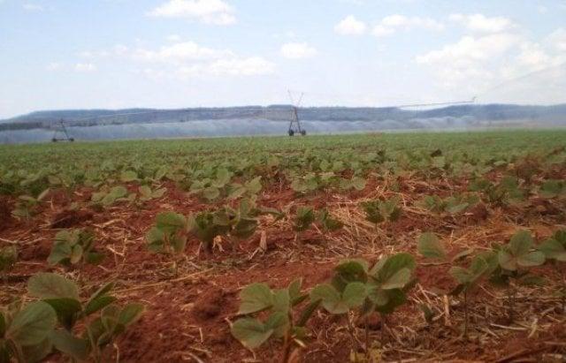 riego-de-una-plantacion-de-soja-del-estado-de-sao-paulo-brasil-el-iica-pide-la-racionalizacion-del-agua-en-cultivos-_595_446_184562