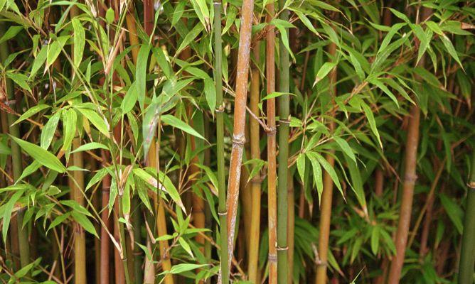 Uso del bamb para el tratamiento de aguas residuales - Como se planta el bambu ...