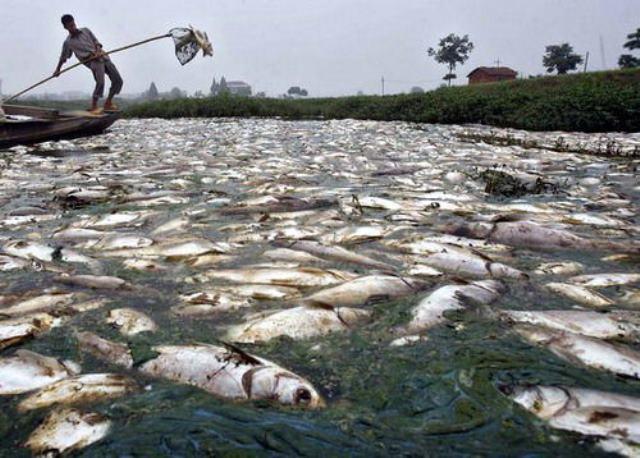 Rio contaminado 2