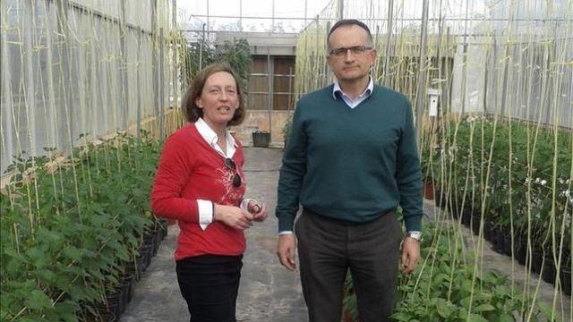 Estudian-plantas-pimientos-resistentes-salinidad_EDIIMA20140222_0184_4