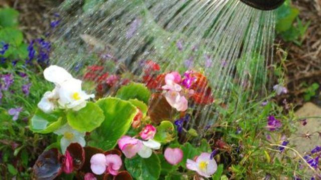 Regar-plantas-manana-evapore-demasiado_NACIMA20140321_0126_6