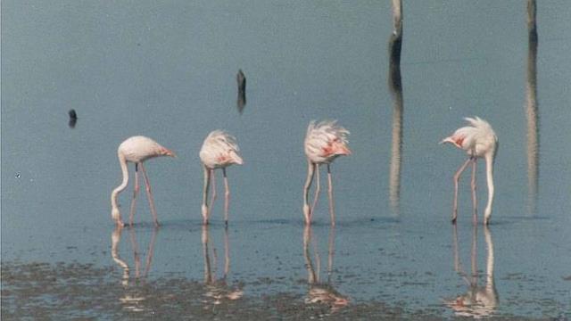 laguna-zarracatin-tres--644x362
