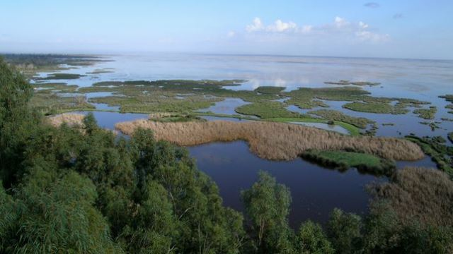 WWF-Dia-Humedales-estuario-Guadalquivir_EDIIMA20140131_0767_4