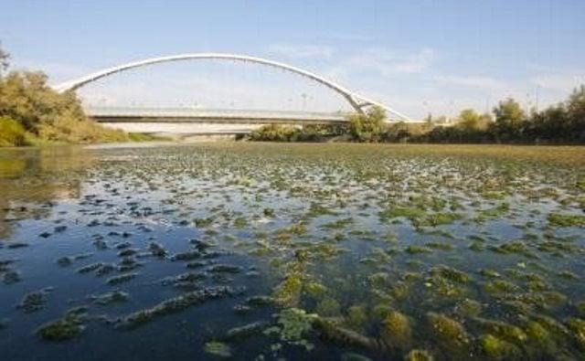 th_73d9f63cbf68d5d7391d41bb4dcbecbf_Ebro-macrófitos-plantas-de-agua