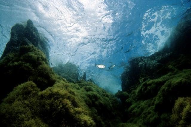 20120608 FOTO DIA OCEANOS de Maria Altamirano_tcm7-211535