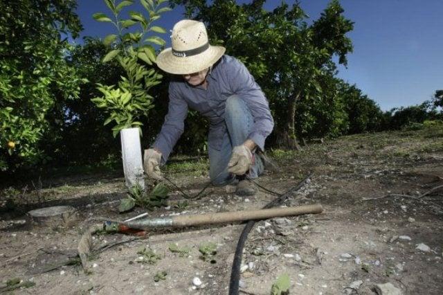 Un agricultor arregla unos tubos del sistema de riego a goteo en un campo de naranjos./ Fotograía: Las Provincias - Juantxo Ribes