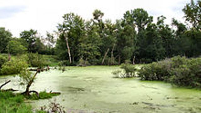220px-Wetland-marshall-county-indiana