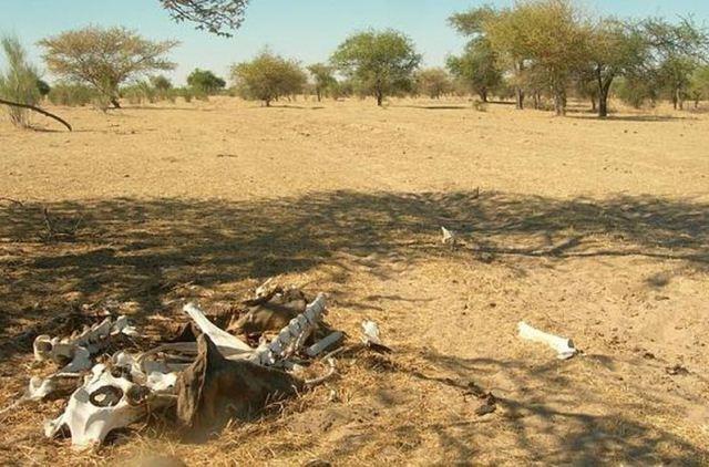 Zonas-Africa-reciben-milimetros-precipitaciones_LNCIMA20150609_0088_5