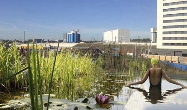 Sustituir el cloro por plantas para purificar agua en piscinas - Cloro en piscinas ...