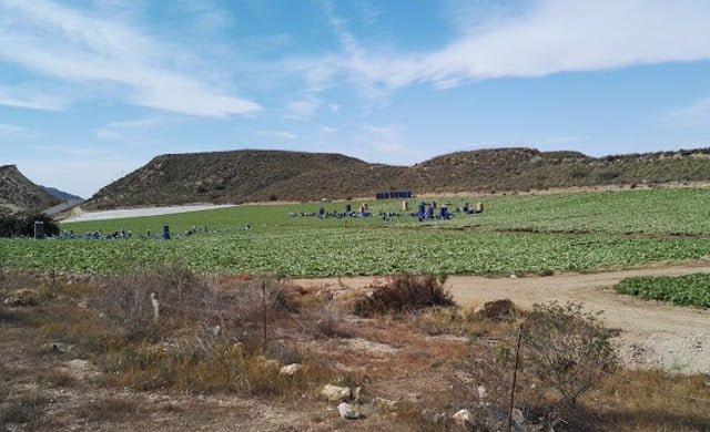 campo-de-lechugas-levante-almeriense